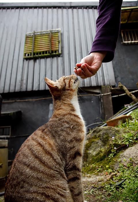 Кошки и коты Хоутонга.