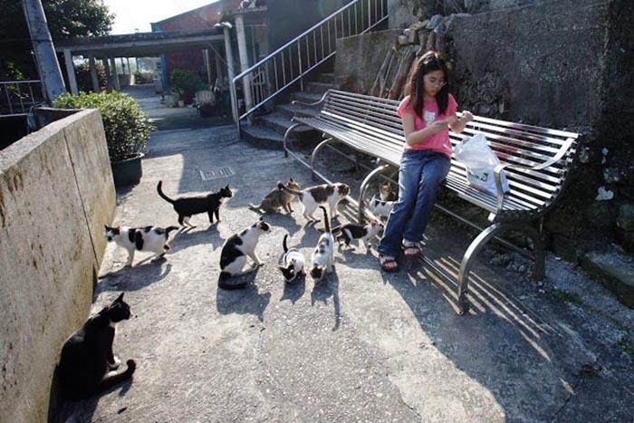 Кошек в деревне запрещается кормить домашней едой.