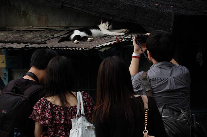 Коты-фотомодели.