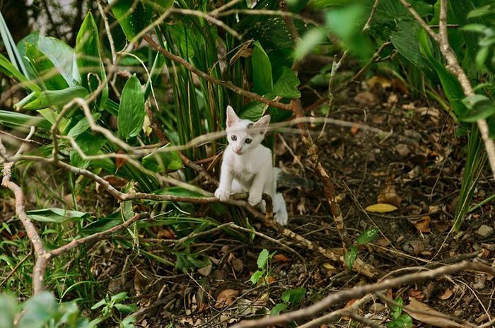 Сейчас кошек в деревне больше сотни.