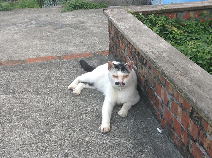 Котики Хоутонга.