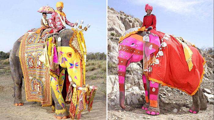Слоны, раскрашенные к Фестивалю Слонов.