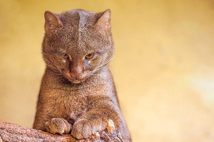 Для этих кошек лучшая еда та, которая сама *бежит* тебе в лапы.