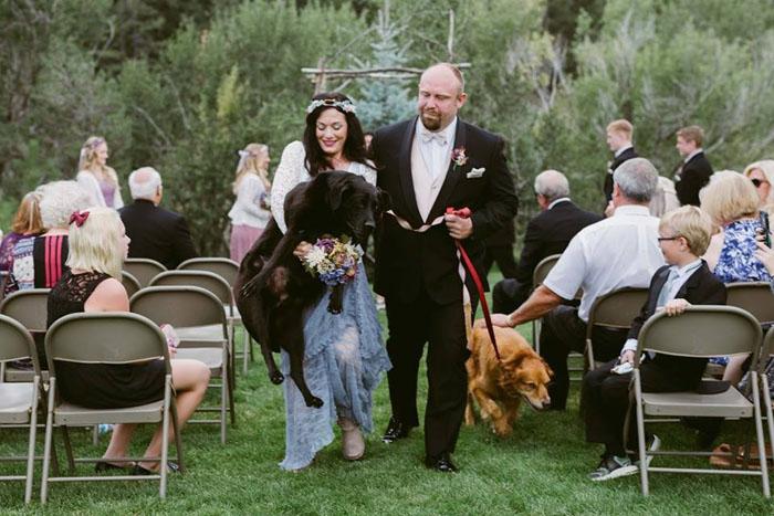 Старый лабрадор Чарли на свадьбе своей хозяйки.  Фото: Jen DZ Photography.