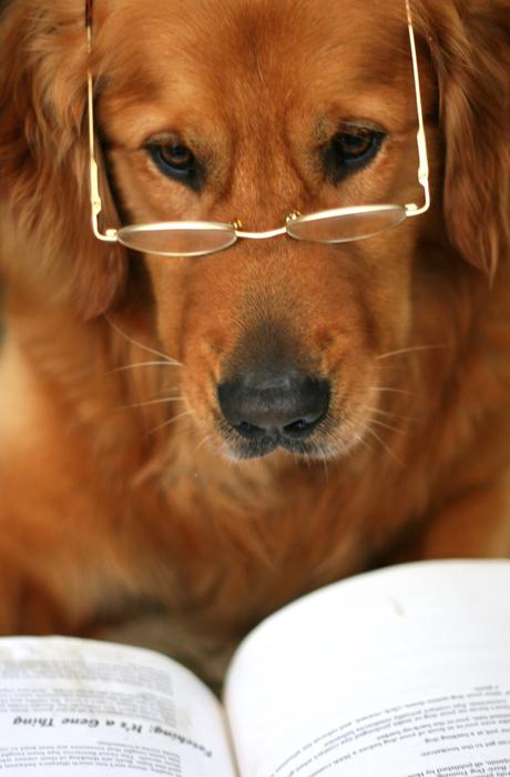 Собаки в объективе Джессики Трин.