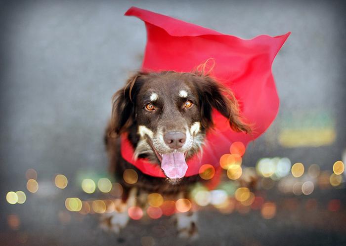 Дэйзи-супермен - фотография Джессики Трин.