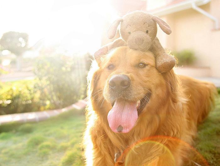 Милые фотографии любимых собак Джессики Трин.