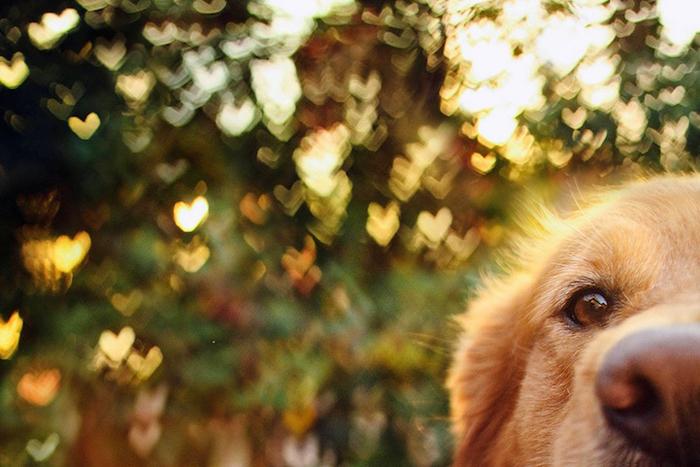 Милые фотографии любимых собак от 17-летнего фотографа.