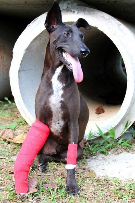 В приюте сейчас не содержатся здоровые животные - только те, кому нужна помощь.