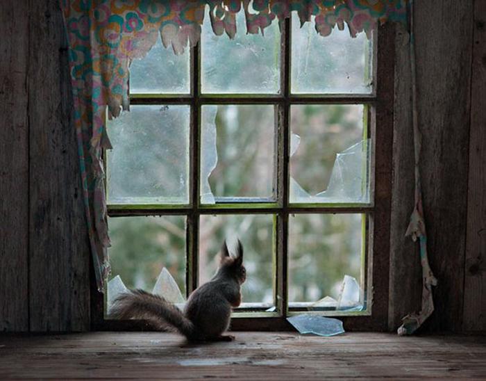 Белка у окна.  Автор фото: Kai Fagerström.