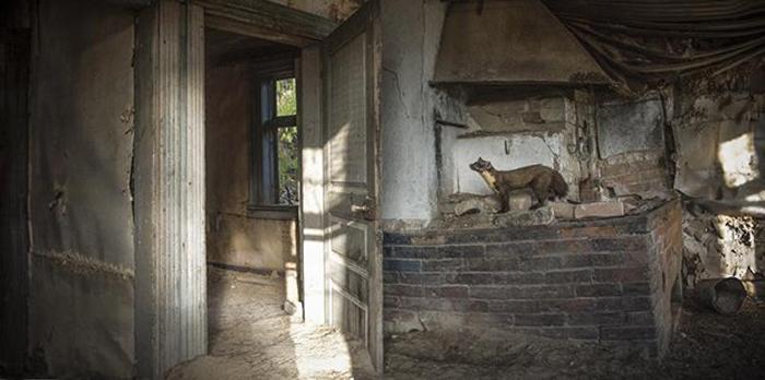 Надо осмотреть свои новые владения. Автор фото: Kai Fagerström.