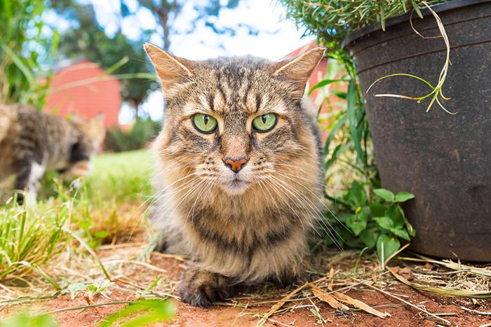 Коты с характером в объективе Эндрю Мартила.