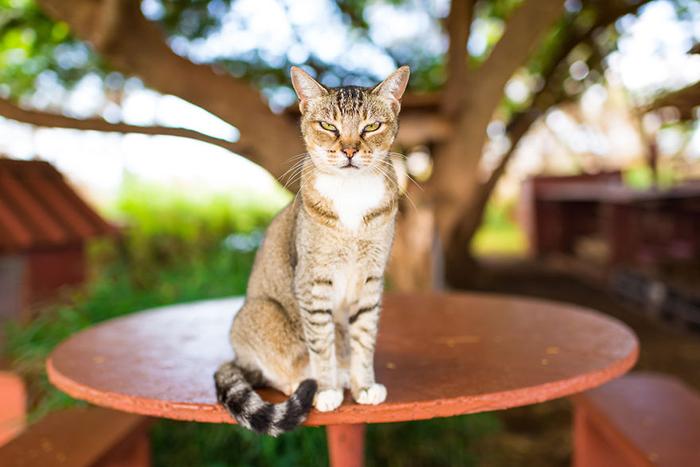 Для котов тут созданы настоящие райские условия. Фото: Andrew Marttila.