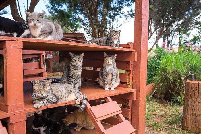 При попадании в приют кошки проходят стерилизацию. Фото: Andrew Marttila.