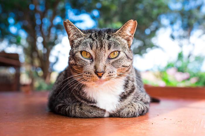 На сегодняшний момент в приюте находится около 600 кошек. Фото: Andrew Marttila.