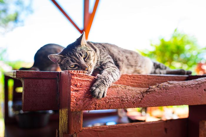 Кошки острова Ланаи. Фото: Andrew Marttila.