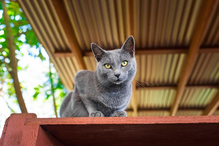 Фотограф Эндрю Мартила приехал на Гавайи, чтобы посетить приют для кошек.
