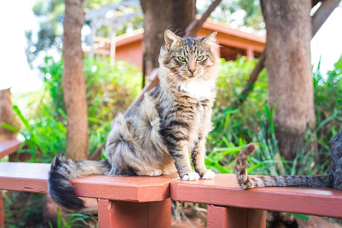Только в этом году в приют попало более 200 кошек.  Фото: Andrew Marttila.