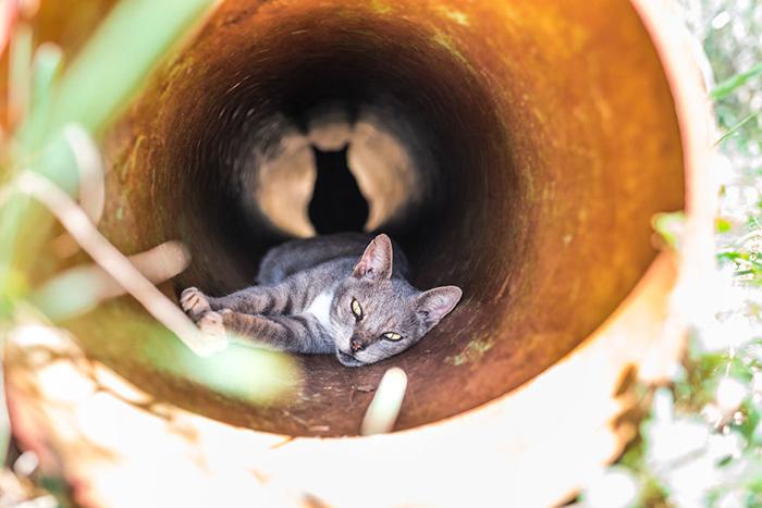Рай для котов. Фото: Andrew Marttila.