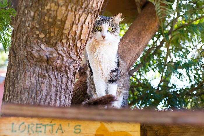 В этом приюте коты определенно счастливы. Фото: Andrew Marttila.