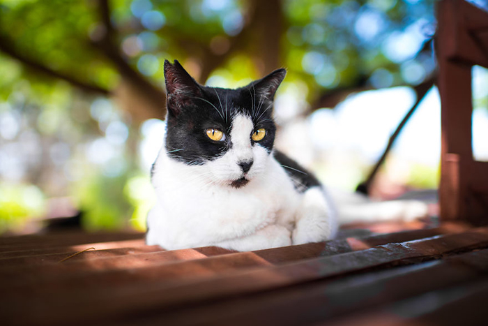 Счастливые коты острова Ланаи. Фото: Andrew Marttila.