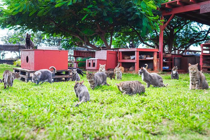 Коты в приюте. Фото: Andrew Marttila.