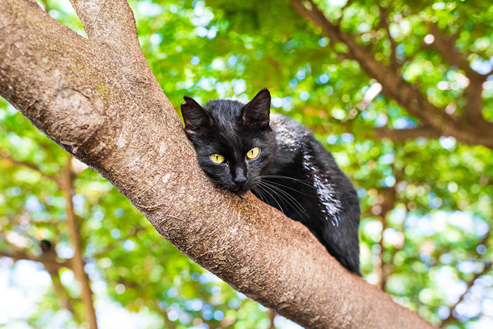Коты острова Ланаи. Фото: Andrew Marttila.