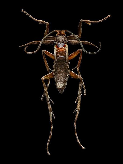 Для каждой части насекомого приходилось заново выставлять свет и регулировать фокус.