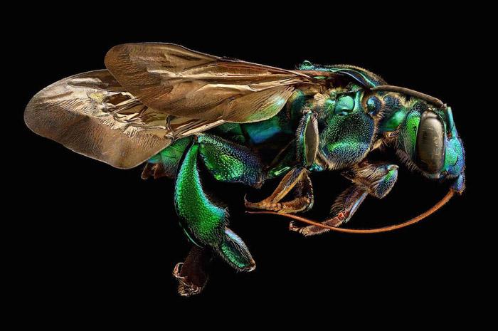 Суперчеткие фотографии насекомых от Левона Бисса.