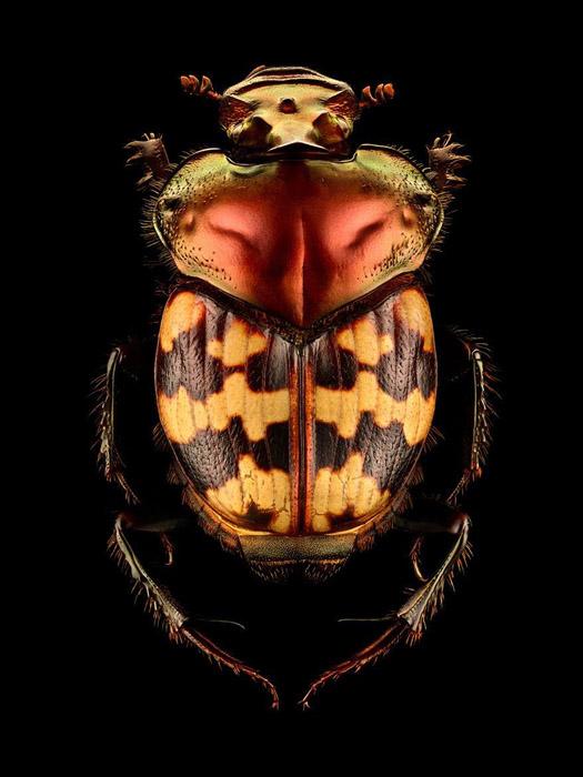 Финальный снимок каждого насекомого состоит из 8-10 тысяч отдельных снимков.
