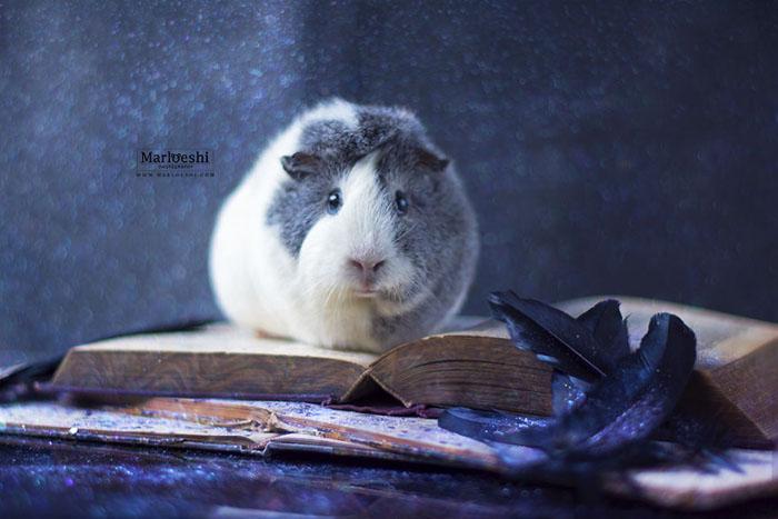 Увлекательное чтение.  Фото: Marloeshi Photography.