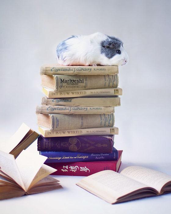 Чтение на лето.  Фото: Marloeshi Photography.