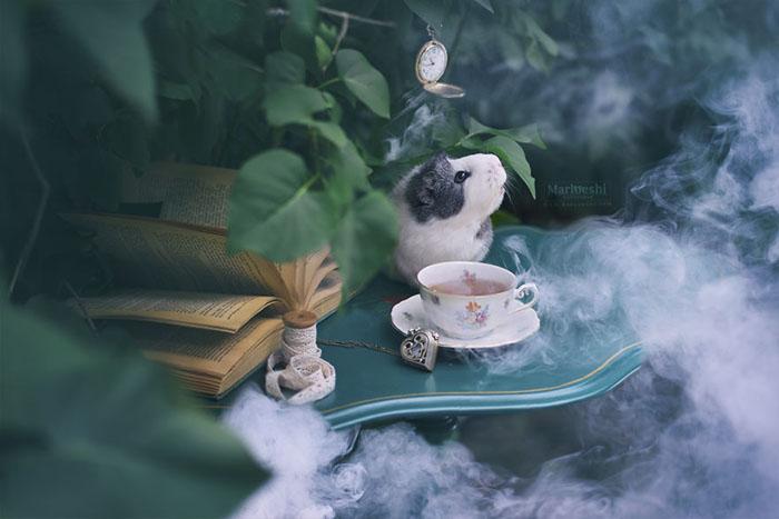 Время для чая.  Фото: Marloeshi Photography.