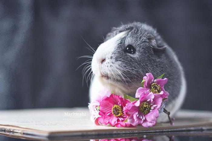 Свинка Мипс.  Фото: Marloeshi Photography.