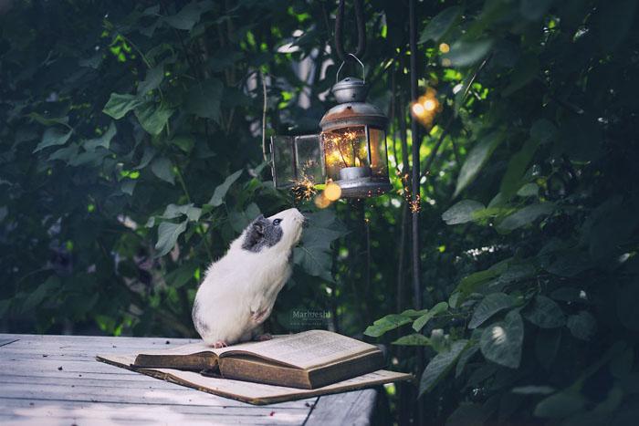 Свет фонарика.  Фото: Marloeshi Photography.