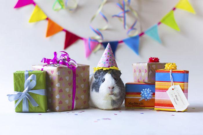 С днем рождения, Мипс!  Фото: Marloeshi Photography.