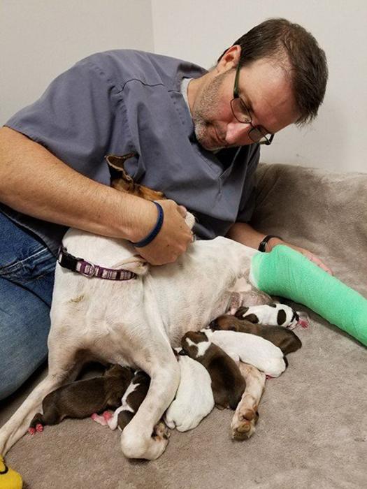 Врачи сделали все возможное, чтобы сохранить жизнь и маме, и ее детям, но, к сожалению, все 10 щенков погибли.