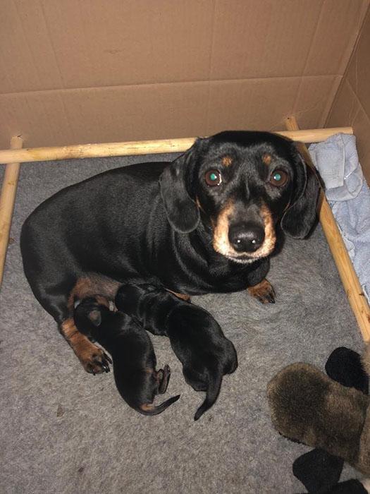 Минни-Винни со своими щенками.