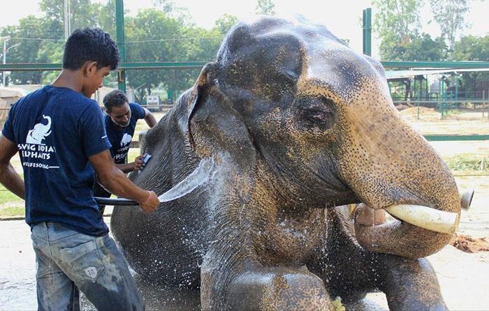 Теперь о слоне будут заботиться.