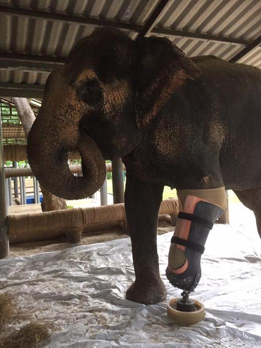Протез для слона должен быть прочным, чтобы выдерживать большой вес, но не тяжелым, чтобы не быть обузой для слона.