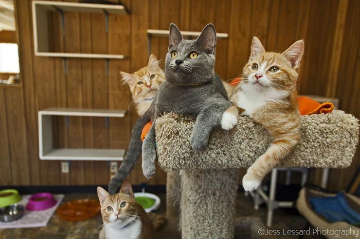 Приют для более, чем 700 кошек.
