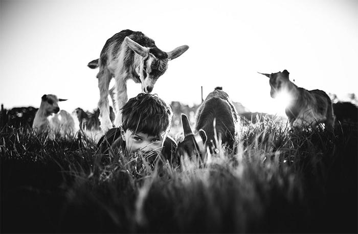 Выпас коз. Фото: Niki Boon.