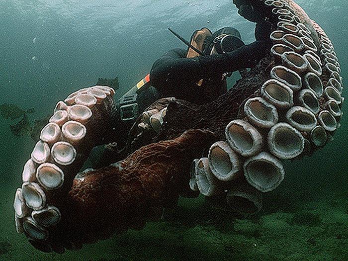 В соревнованиях побеждала та команда, которая поднимет самого большого осьминога.