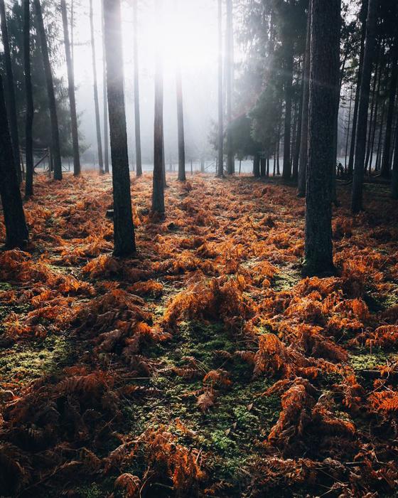 Утро в лесу. Фото: Patrick Monatsberger.