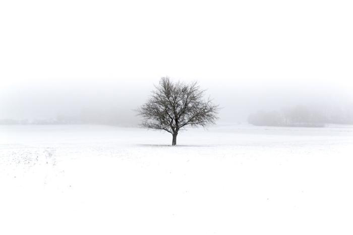 Одинокое дерево. Фото: Patrick Monatsberger.