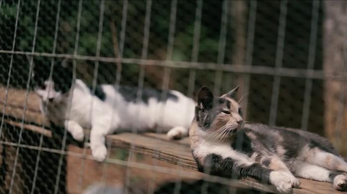 Кошки в приюте.