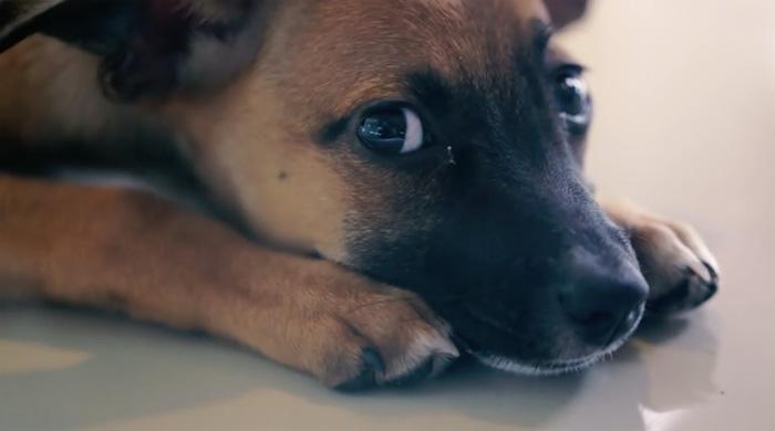 Собака, ожидающая новых хозяев.