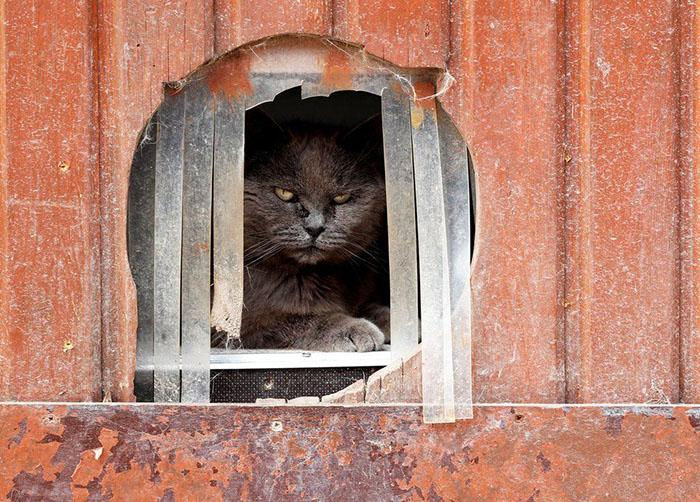 Кошка Калин не особо любит фотографироваться. Фото: Yves Herman.