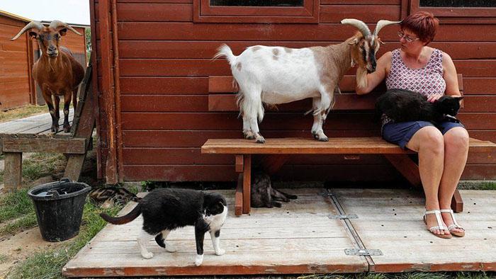 В приюте есть не только кошки и собаки, но также козы, пони и овечки. Фото: Yves Herman.