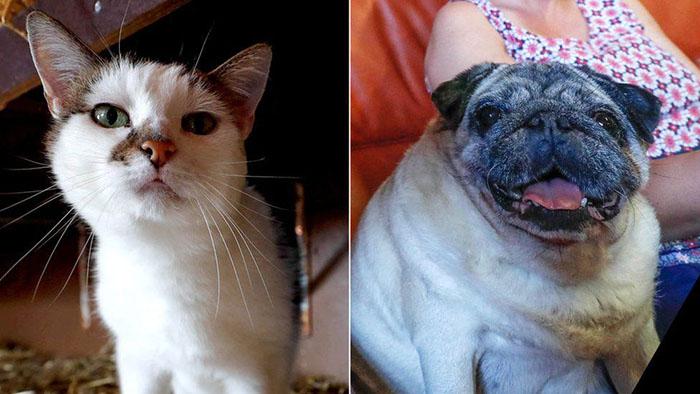 15-летняя кошка Азурия и девятилетний мопс Рамзес. Фото: Yves Herman.